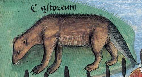 castor-cola-pescado-cuaresma.jpg