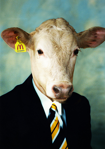 vaca-uniforme2.jpg